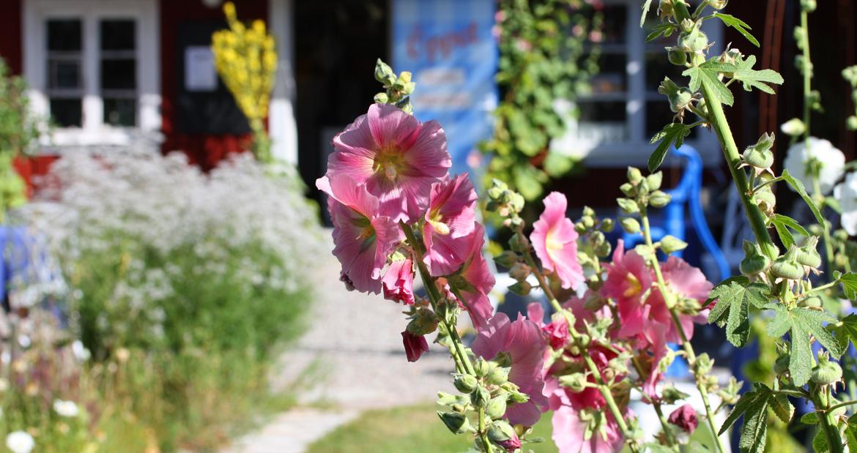 Trädgården i blom
